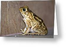 Frog-facing The Wall Greeting Card by Miguel Hernandez