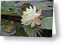 Frog In Awe Of White Water Lily Greeting Card