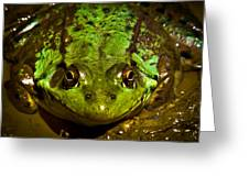 Frog In Mud Greeting Card