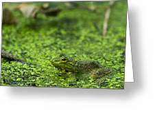 Frog In Swamp 2 Of 3 Greeting Card