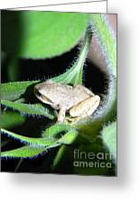 Frog In The Garden Greeting Card