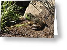 American Bull Frog Greeting Card