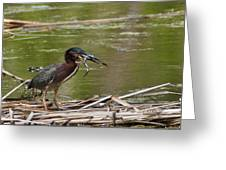 Frog Legs And Green Heron Greeting Card
