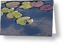 Frog On A Lilypad Greeting Card