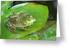Frog On Lily Pad Photo Greeting Card