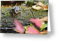 Frog On Log 1 Of 3 Greeting Card