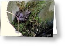 Frog On Moss On Wall Greeting Card