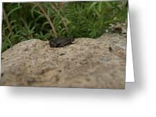 Frog On Rock Greeting Card by Corina Bishop
