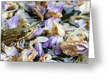Frog On The Flowers Greeting Card