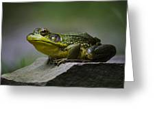 Frog Outcrop Greeting Card