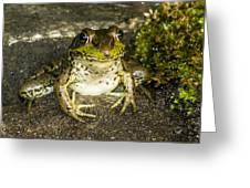 Frog Pose Greeting Card