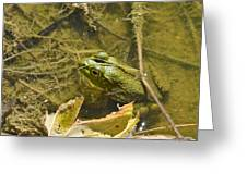 Frog Thinks He's Hidden Under A Twig Greeting Card