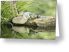 Bull Frog On A Rock Greeting Card