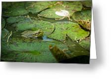 Froggy Bottom Greeting Card