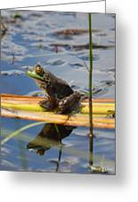 Froggy Reflections Greeting Card