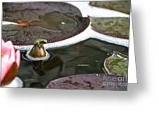 Froggy Throne Greeting Card