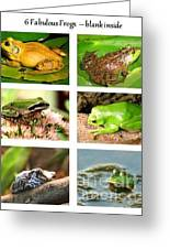 Frogs - Boxed Cards Greeting Card