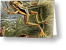 Frogs Detail Greeting Card