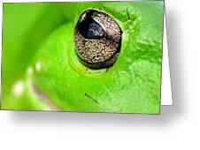 Frog's Eye Greeting Card by Kaye Menner