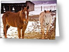 Frolicking In The Snow  Greeting Card