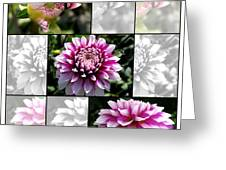 From Bud To Bloom - Dahlia Named Brian Ray Greeting Card