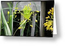 From Bud To Bloom - Fireworks Allium Greeting Card