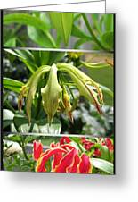 From Bud To Bloom - Gloriosa Named Rothschildiana Greeting Card