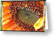 From Bud To Bloom - Sunflower Greeting Card
