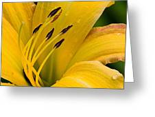 From Hal's Garden 10 Greeting Card