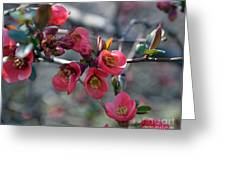 From Quince I Came Greeting Card