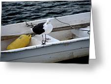 From Rockport Ma A Seagull Chilling Out In A Rowboat Greeting Card