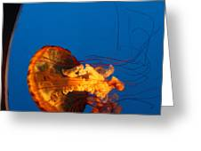 From The Deep - Jelly Fish Greeting Card