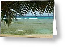 Fronds  Greeting Card