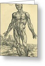 Front Of Male Human Body.anatomical Greeting Card