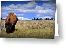 Frontview Of American Bison Greeting Card