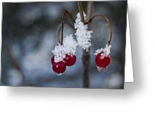 Frost Berries Greeting Card