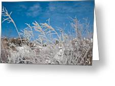 Frost Covered Grasses Against The Sky Greeting Card