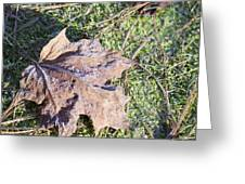Frost Covered Leaf Greeting Card