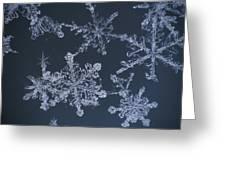 Frost Crystal On Glass Kodiak Isl Greeting Card