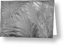 Frost Designs 1 Greeting Card