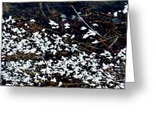 Frost Flakes On Ice - 10 Greeting Card