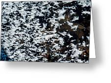 Frost Flakes On Ice - 11 Greeting Card
