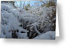 Frost Grass Greeting Card