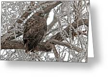 Frost Hawk Greeting Card