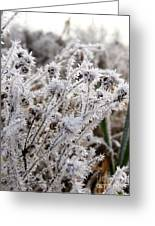 Frost In The Field Greeting Card