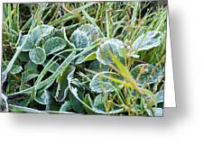 Frost On Strawberry Leaves Greeting Card