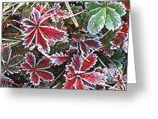 Frost On Wild Strawberry Greeting Card