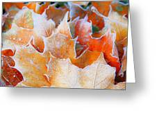 Frost Touched Greeting Card