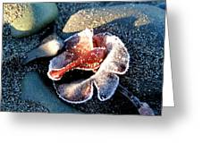 Frosted Algae Greeting Card