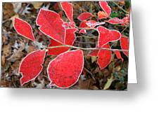Frosted Blueberry Leaves Greeting Card
